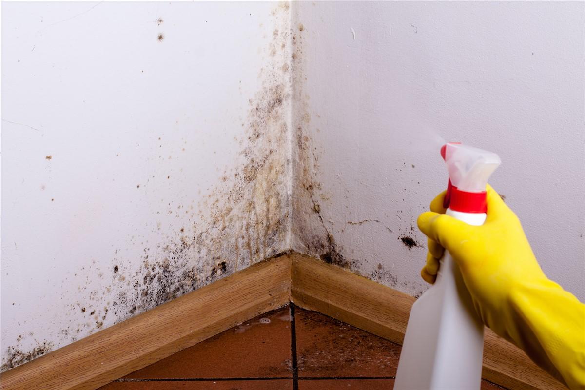Как убрать плесень в ванной комнате на стенах своими руками 82