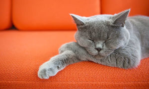 Как быстро вывести запах кошачьей мочи с дивана или другой мягкой мебели