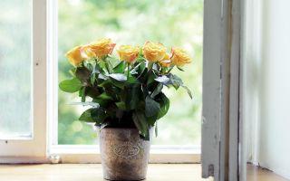 Как очистить воздух в квартире с помощью растений и цветов