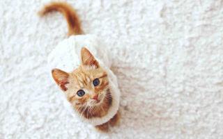 Как убрать запах кошачьей мочи быстро и навсегда
