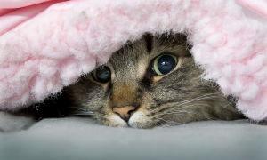 Чем быстро вывести запах кошачьей мочи с ковра