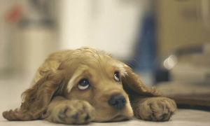 Чем быстро убрать запах собачьей мочи