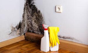 Как быстро навсегда избавиться от черной плесени на стенах