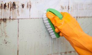 Как вывести плесень со стен дома навсегда