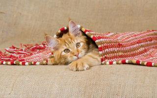 Как убрать запах кошки, выбираем средство для удаления запаха кошачьей мочи