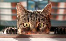 Чем отмыть кошачью мочу с одежды в домашних условиях