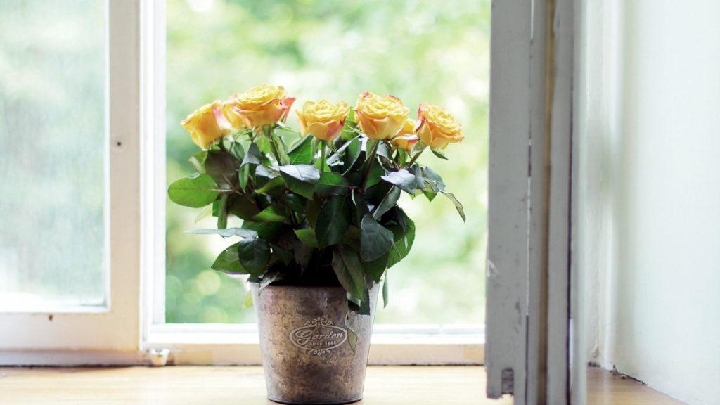 Цветы в горшке на подоконнике