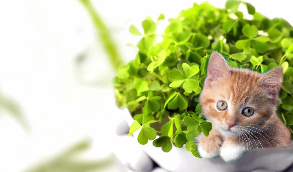 Котёнок и зелёное растение