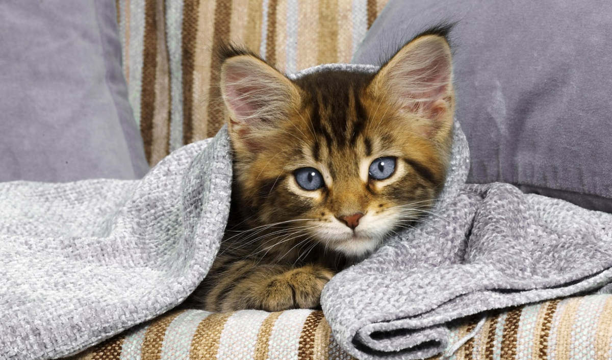 Котёнок под полотенцем на диване