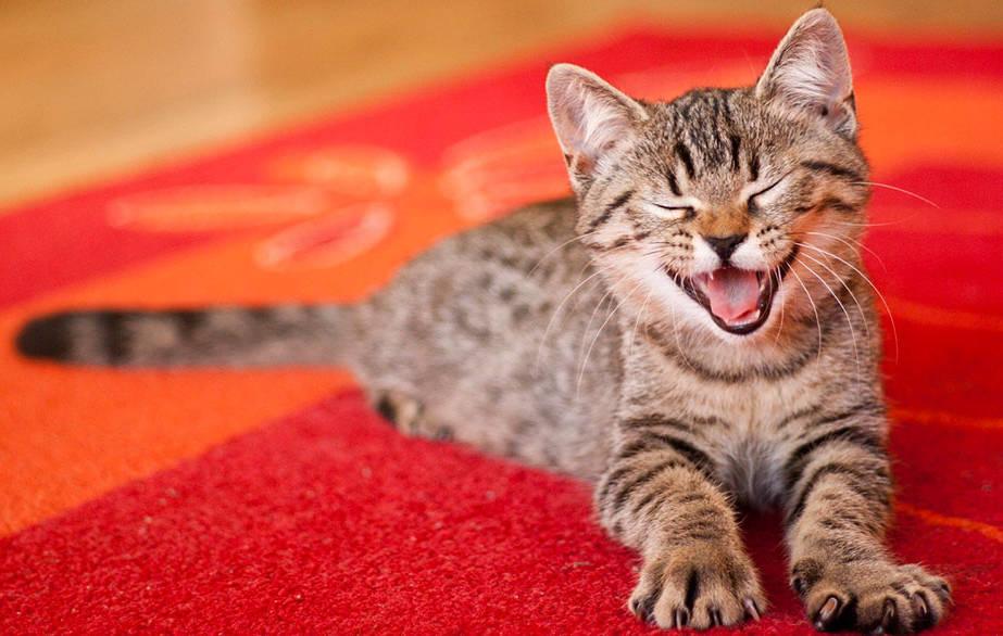 Котёнок на ковре