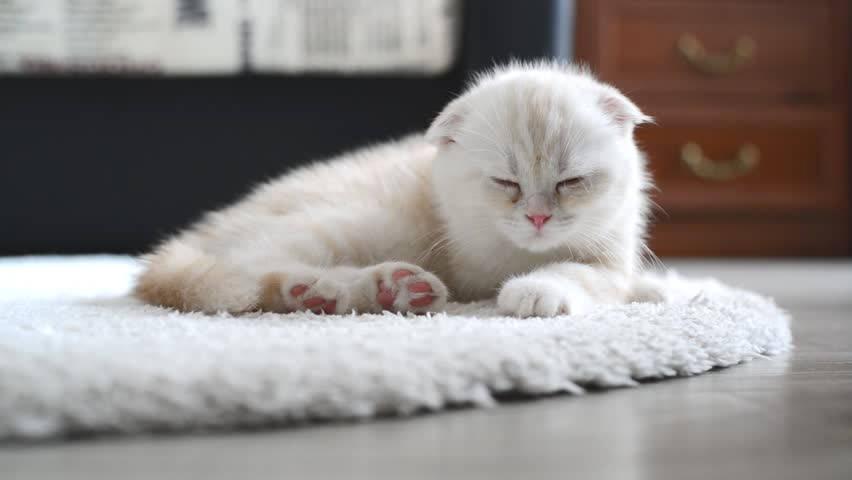 Котёнок спит на ковре