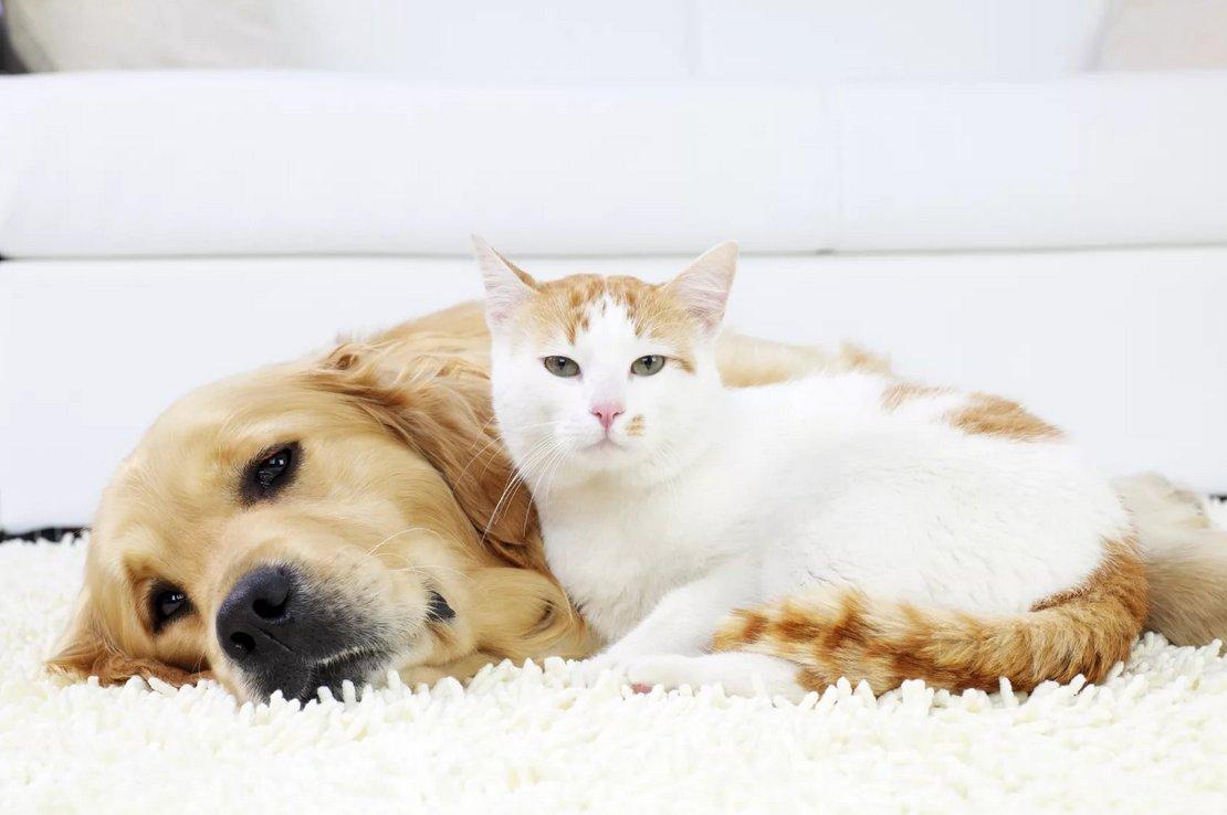 Собака и кошка на диване