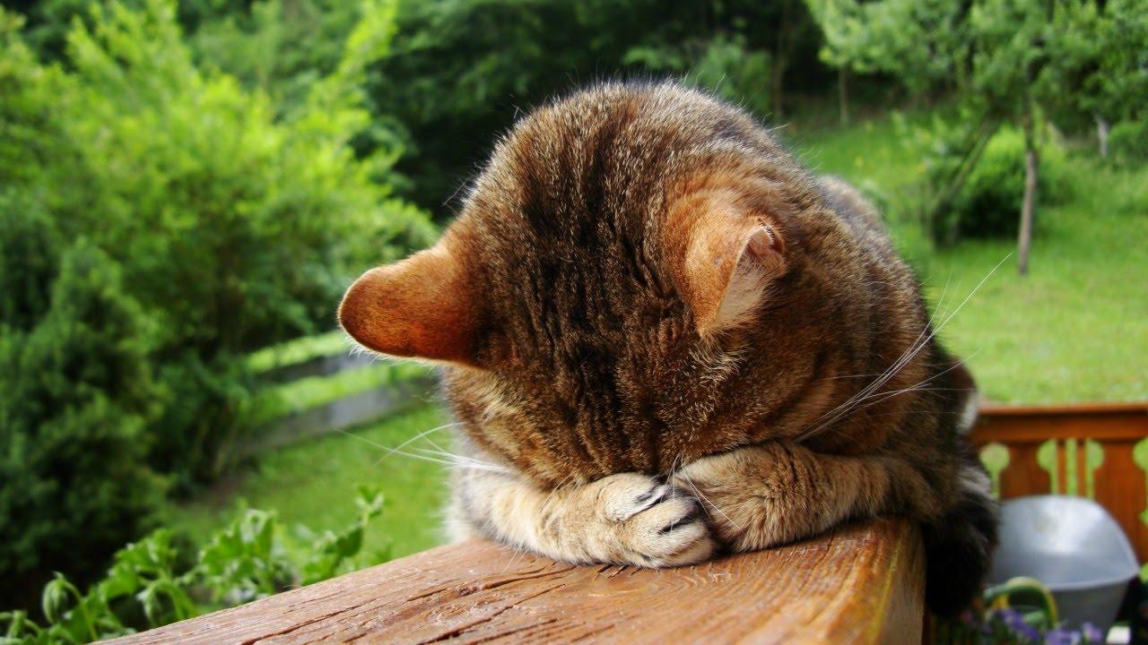 Виноватая кошка