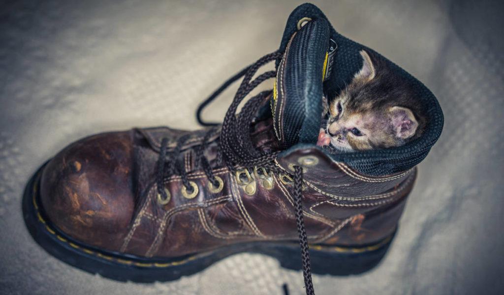 Котёнок в ботинке
