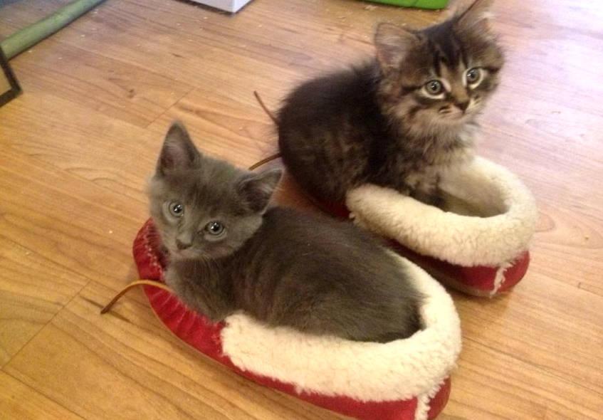 Котята в тапках