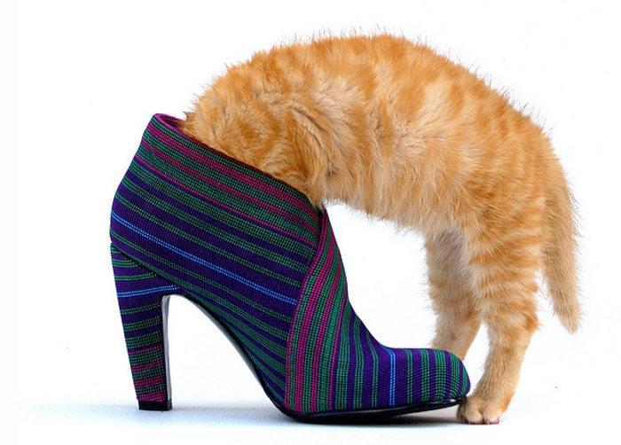 Кошка лезет в ботинок