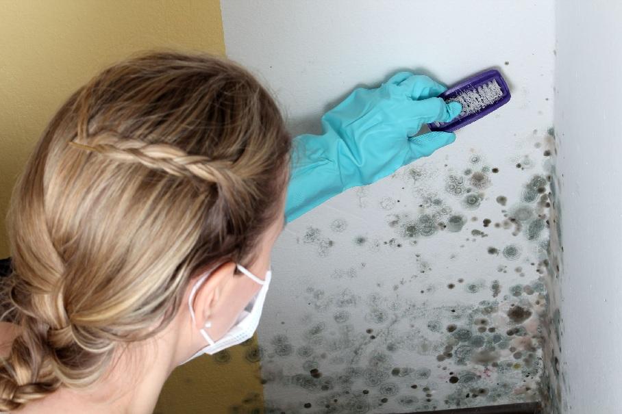 Девушка чистит плесень на стене