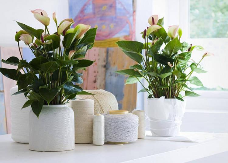 Цветы в комнате