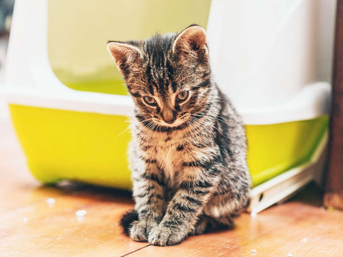 Виноватый котёнок