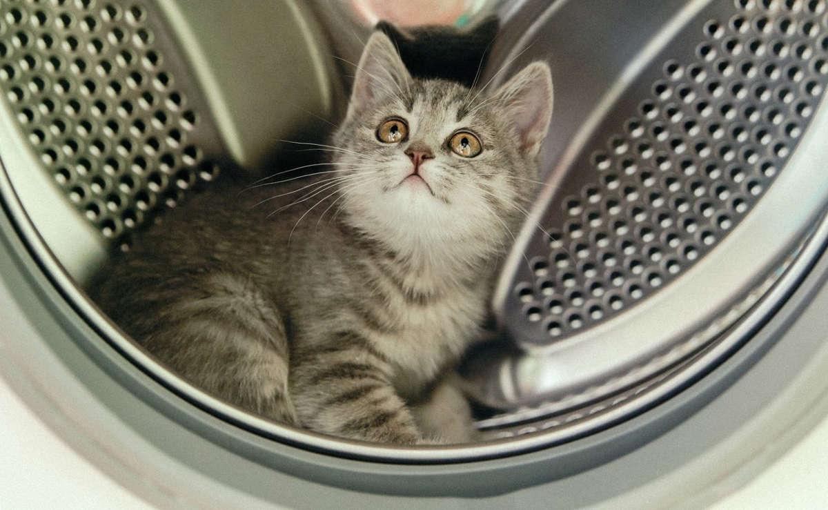 Котёнок сидит в стиральной машине